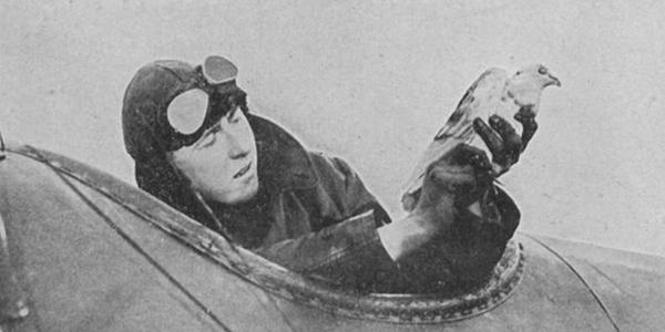 Картинки по запросу Голуби-герои Первой и Второй мировой войны